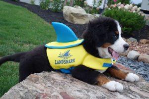 Margaritaville Land Shark pet vest