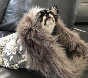 Luxury Sleeping Bag for Dogs
