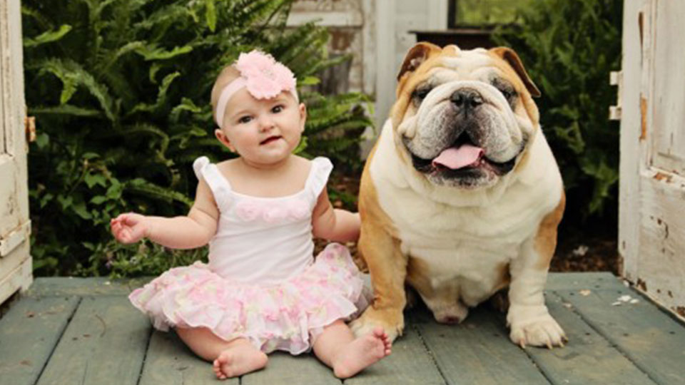 English Bulldog and baby sitting next to each other.