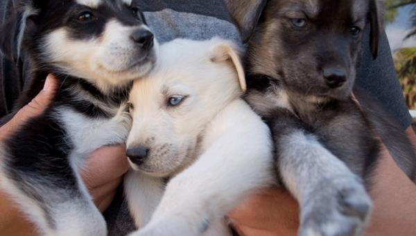 14 perros mestizos que nos prueban que es el AMOR