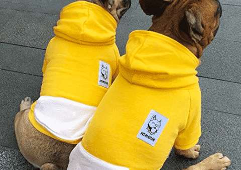 French Bulldog Clothes: Our Favorite Options for Frenchies in 2019