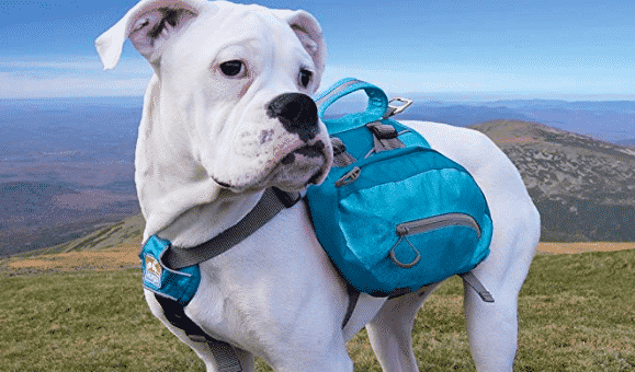 25 Best Dog Hiking Backpacks for 2019
