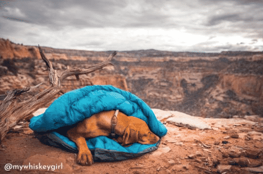 Whyld River Sleeping Bag