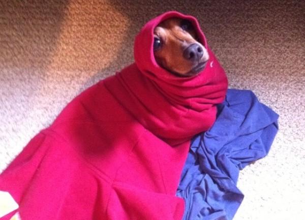 Wursthund in Decke eingewickelt