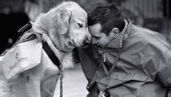 12 momentos que demuestran que los perros son todo amor