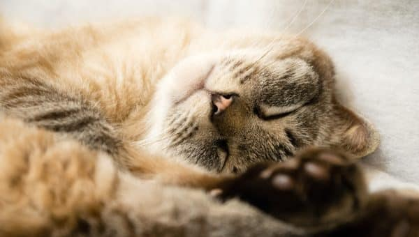How Old Is Your Pet in Cat Years?