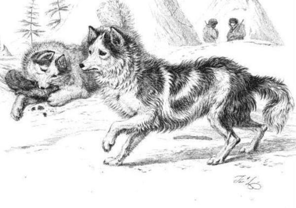 Ausgestorbene Hunderassen - Hare Indian Dog