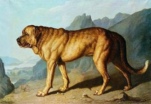 Ausgestorbene Hunderassen - Alpine Mastiff