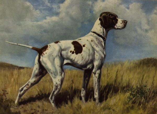 Ausgestorbene Hunderassen - Braque du Puy