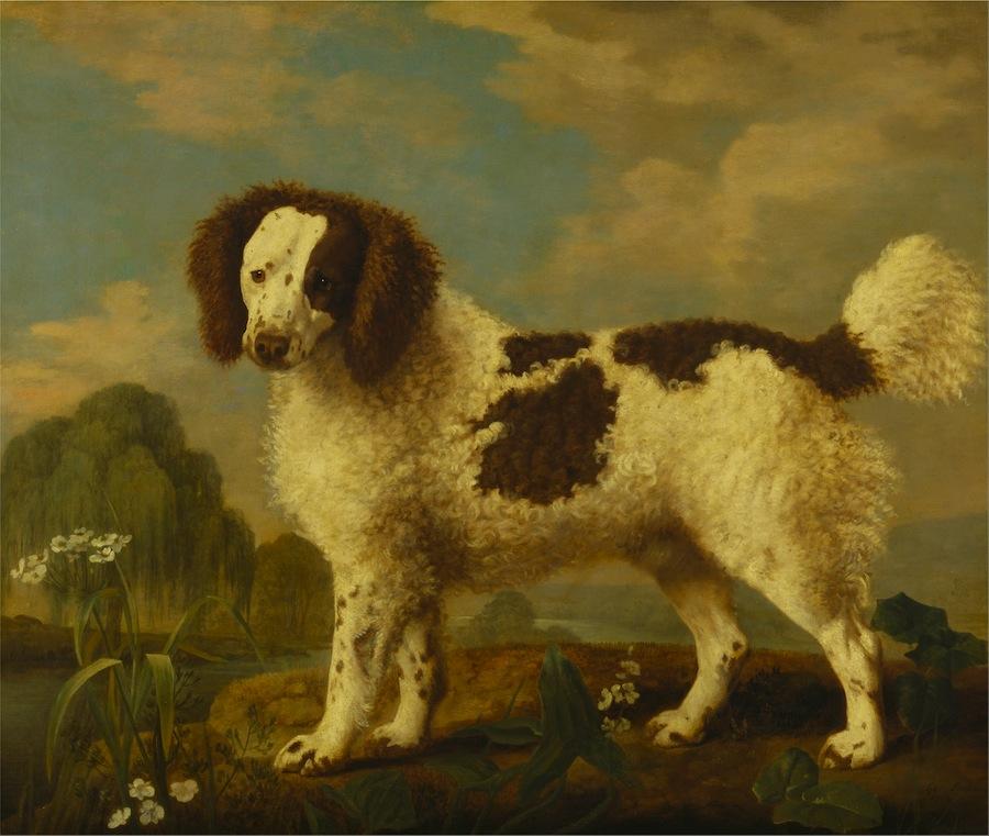 Ausgestorbene Hunderassen - Norfolk Hund