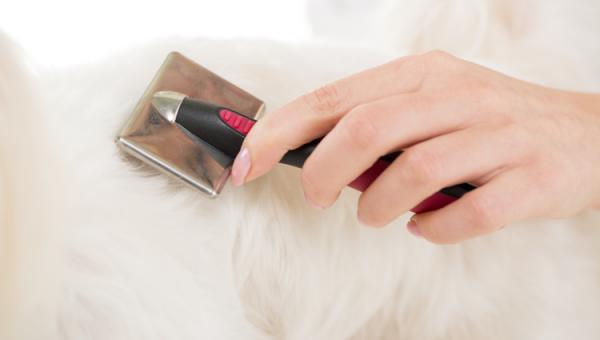 6 tips for å holde huset fritt for uønsket hundehår