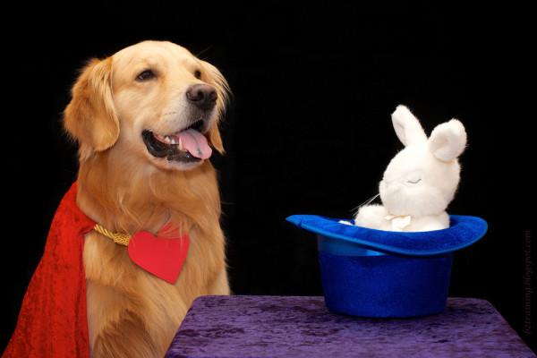 cane con pelo rossiccio sorride con una collana con un cuore e un cappello a cilindro con un coniglio bianco dentro su un tavolo con una tovaglia viola