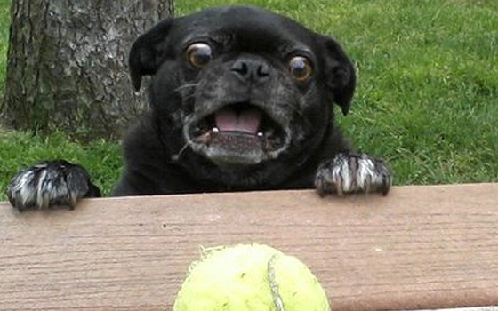 carlino mira una pelota de tenis