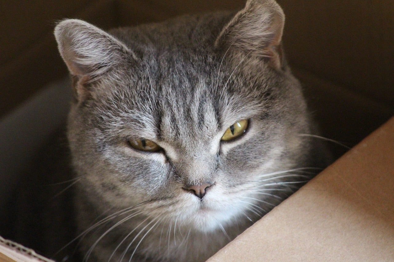 An Insider's Guide to Cat Behavior | The Dog People by