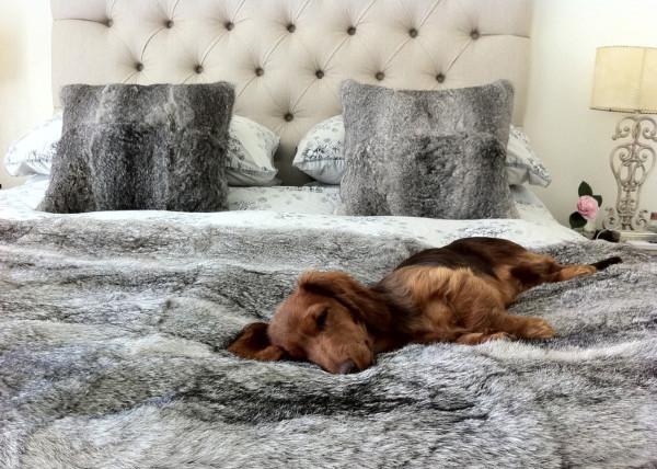 chien sur le lit