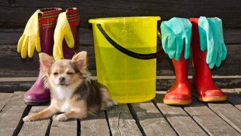 chien nettoyage