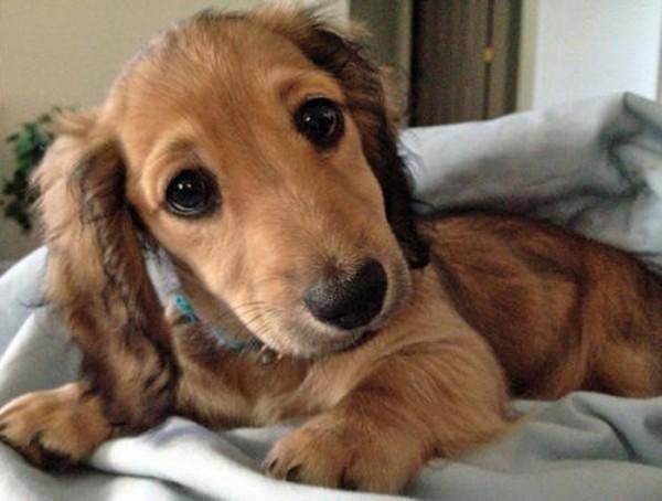 Wursthund