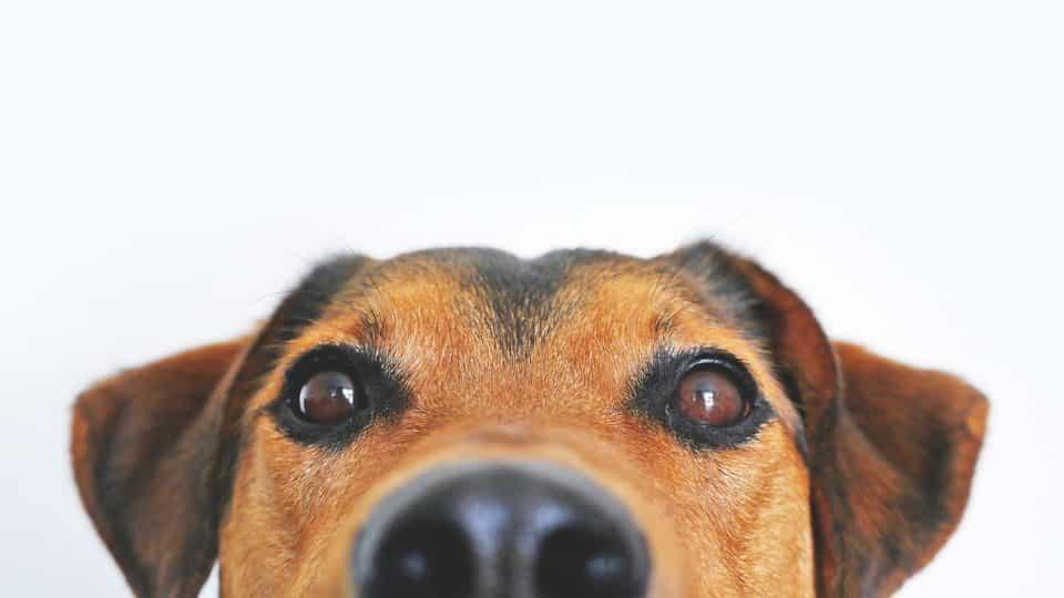 dog peeking into edge of picture