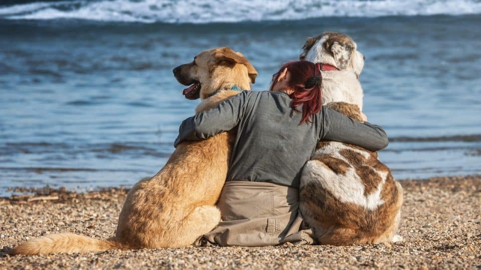 A woman at the beach with her two dogs.