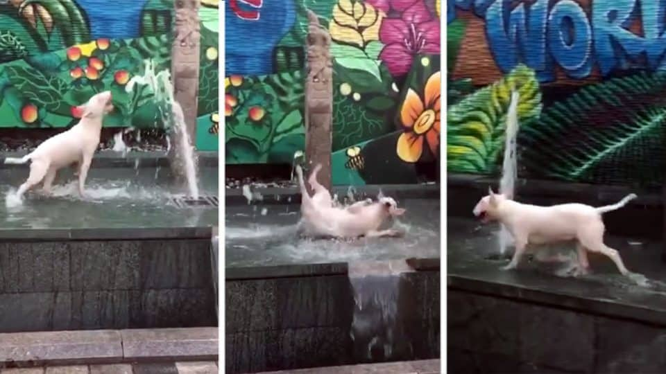 dogs cooling off in pubilc fountains