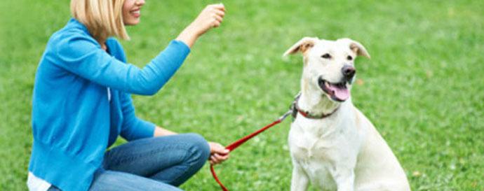 La orden Junto de entrenamiento canino - chica entrenando a su perro con correa