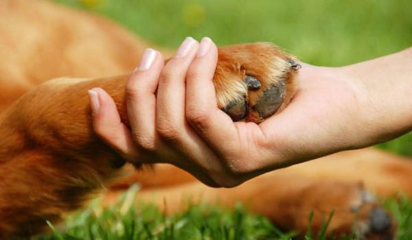umano da la mano a una zampa di cane