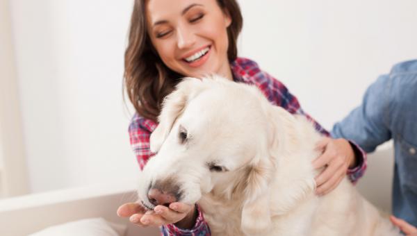 Hvorfor slikker hunden meg? Vi forklarer hundens slikkevaner