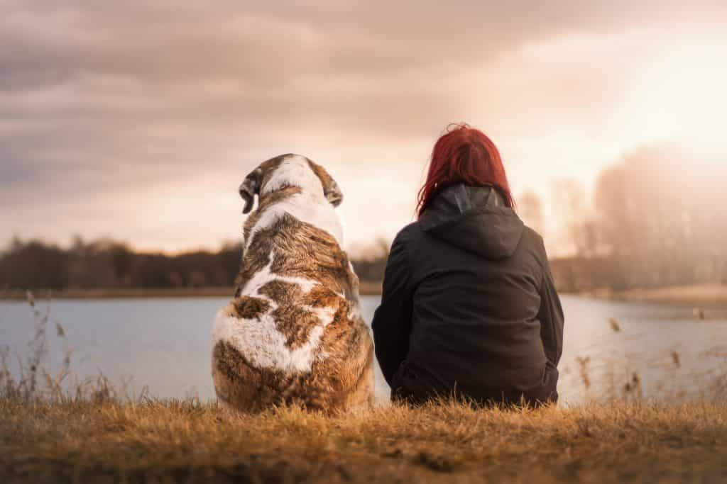 78 Best Dog Names That Mean Friend For 2019 The Dog People