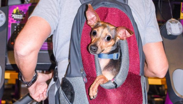 "Disabled Dog ""Running"" Marathons in Owner's Backpack Is Helping Shelter Dogs"