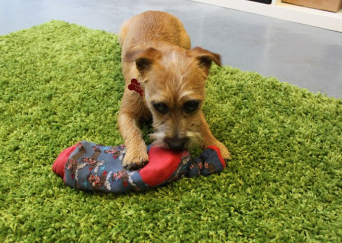 juguetes caseros para perros DogBuddy