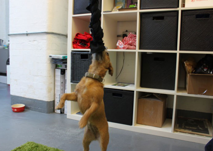 la trenza es uno de los juguetes caseros para perros hecho por DogBuddy