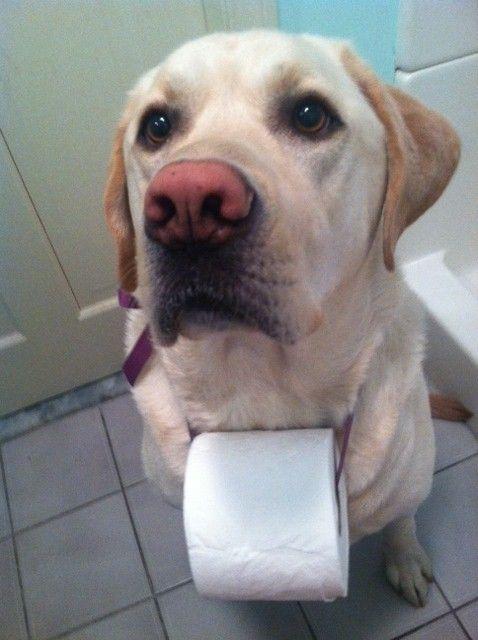 Hund mit WC Papier