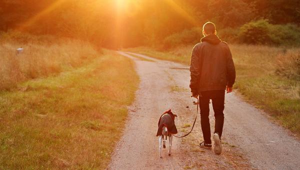 Come insegnare al tuo cane ad andare al guinzaglio e a camminare di fianco a te