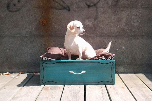 lit pour chien fait avec un vieux tiroir