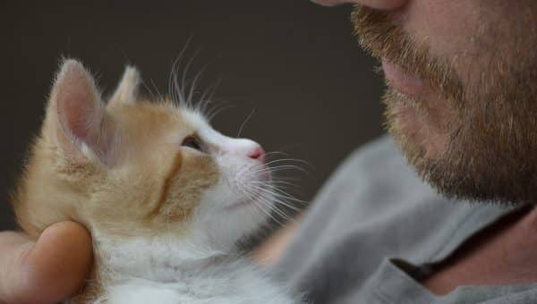 8 Ways to Say 'I Love You' in Cat Language