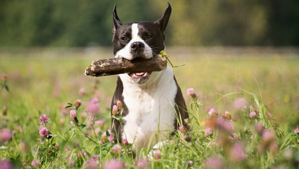 26 x Honden Die Niet Kunnen Wachten Om Naar Buiten Te Gaan