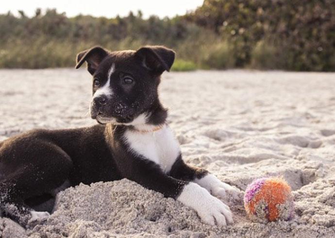 mi perro no viene cuando le llamo - cachorro jugando en la playa