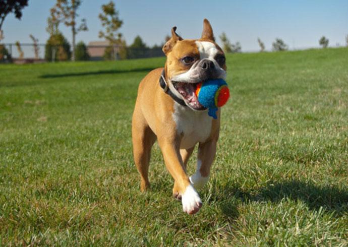 mi perro no viene cuando le llamo - perro buscando una pelota