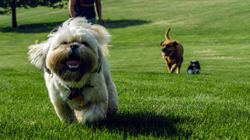 mi perro no viene cuando le llamo - perro en el parque