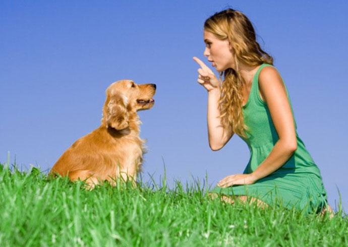 mi perro no viene cuando le llamo - propietaria castigando a su perro cocker spaniel