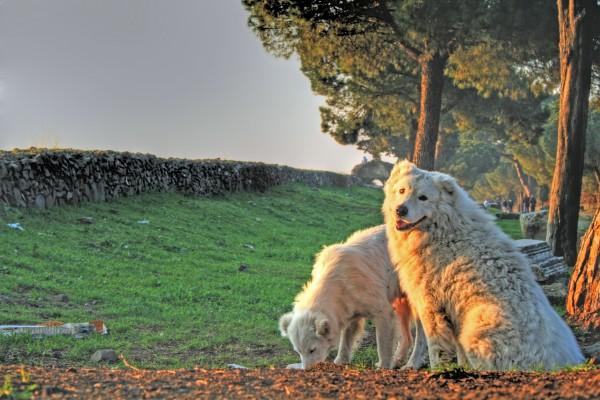 passeggiare con il cane a roma appia antica