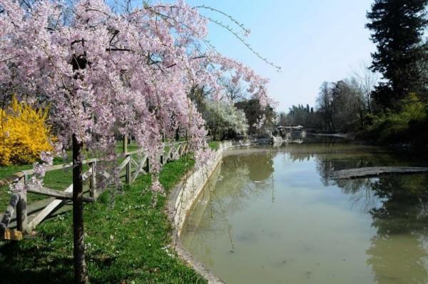 passeggiare con il tuo cane a bologna giardini margherita