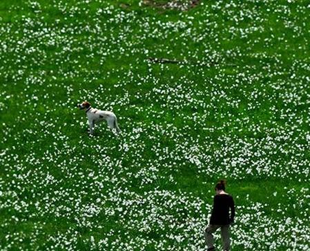 passeggiare con il tuo cane a genova il sentiero dei narcisi