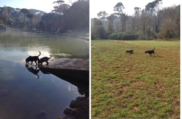 passeggiare con il tuo cane a roma villa ada