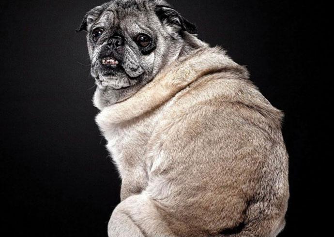perro no deja de temblar porque es un perro mayor