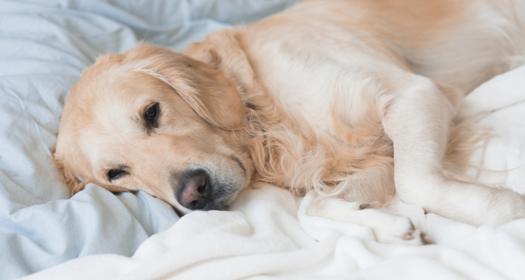 How to Spot and Treat Dog Colds, Flu and Kennel Cough