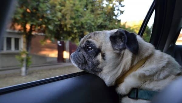 4 Ways to Protect Dogs in Hot Cars