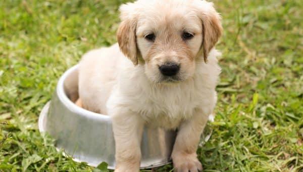 Top Cute Dog Names in Canada in 2019