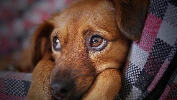 Alimenti che aiutano a combattere l'ansia nei cani
