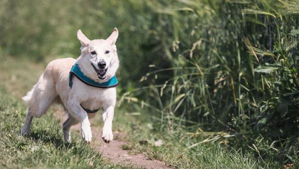 Conseils de dressage essentiels pour un chien adolescent